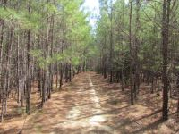 Hollar Tract - Union County - SOLD